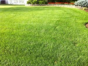 lawn care home 6